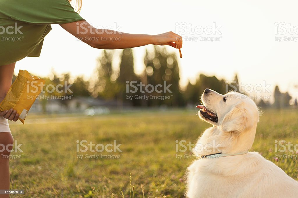 Training dog stock photo