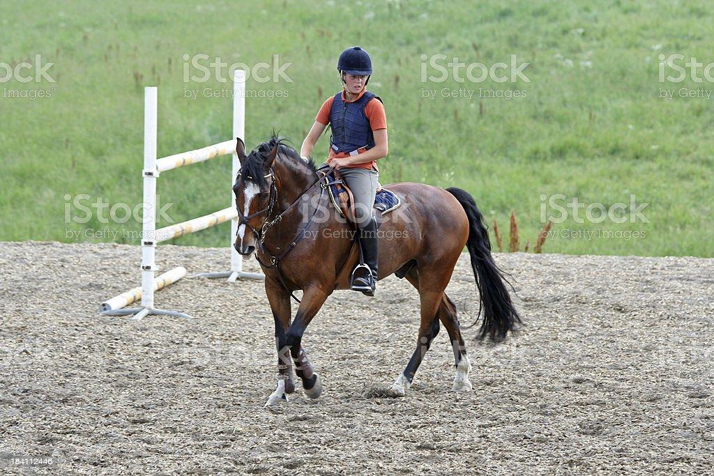 Training horse jumping royalty-free stock photo