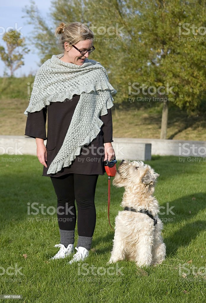 Training the dog stock photo