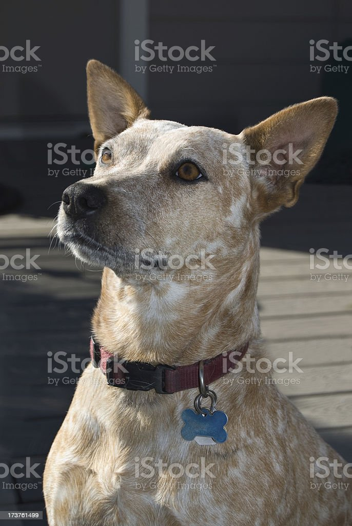 Training the Dog with Treats stock photo