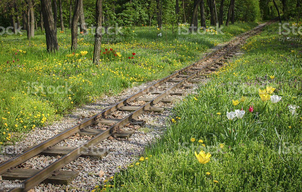 Traintracks through romantic forest stock photo