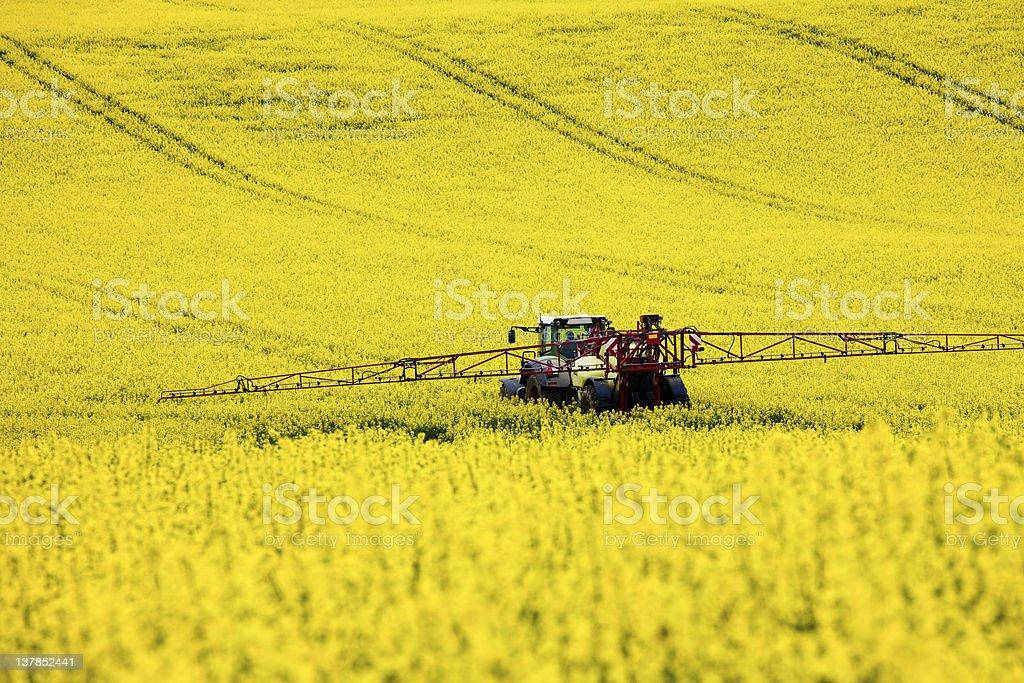 Traktor im Rapsfeld stock photo