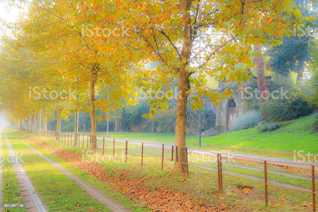 Tram tracks in perspective. Autumn season. Blurry effect intenti stock photo