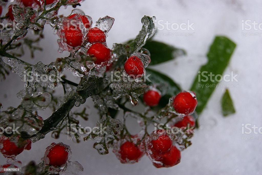 Trampled Berries in Ice royalty-free stock photo
