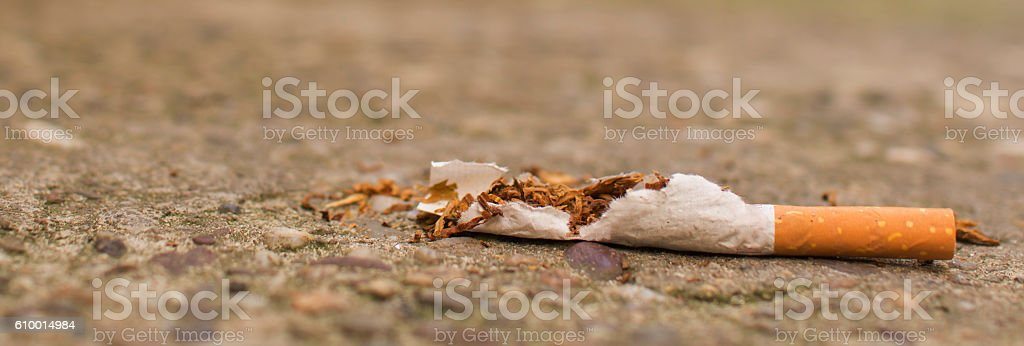 Trampled cigars stock photo