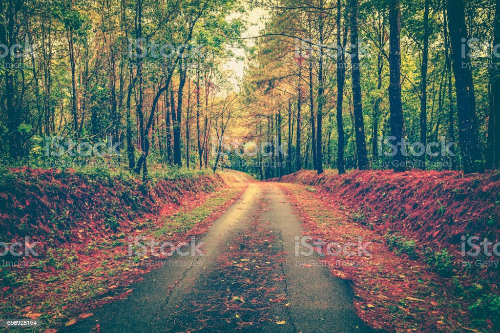 Tranquil autumn forest with a footpath through a beautiful woods. stock photo