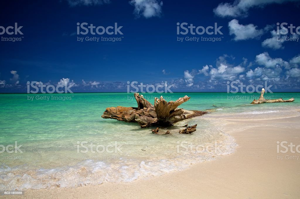 Tranquil Beach Scene with Driftwood on Shore stock photo