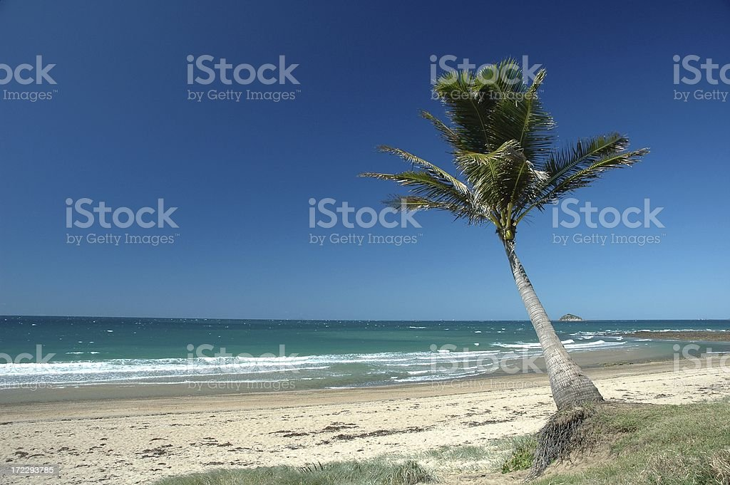 Tranquil Beach Scene with Palm Tree royalty-free stock photo