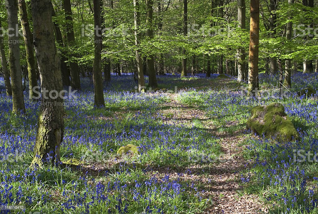 Tranquil forest and wild flowers royalty-free stock photo