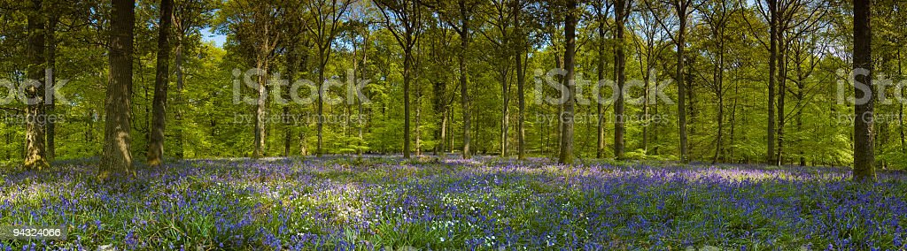 Tranquil forest, flowers and foliage royalty-free stock photo