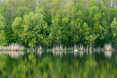 Tranquil lake with green trees reflection
