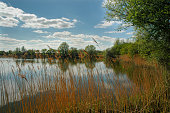 Tranquil lakeside scene over reeds in England