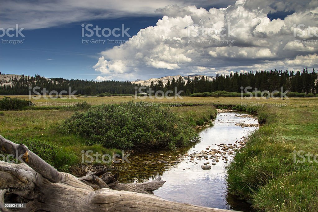 Tranquil Meadow in Yosemite National Park stock photo
