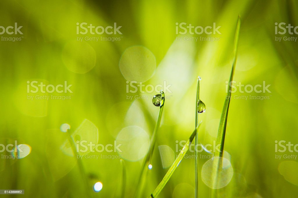 Tranquil Morning stock photo