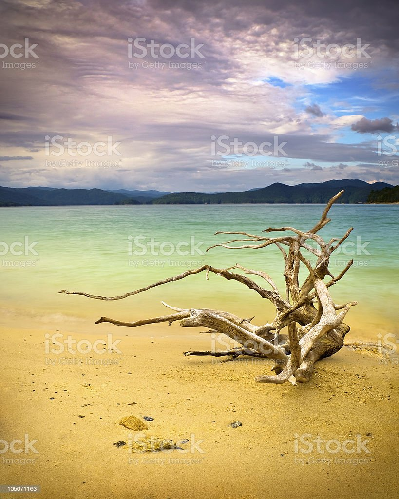 Tranquil Mountain Lake w/ Driftwood On Beach royalty-free stock photo