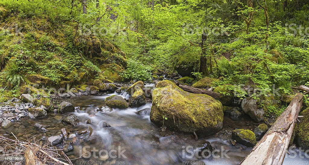 Tranquil mountain stream flowing through green forest wilderness stock photo