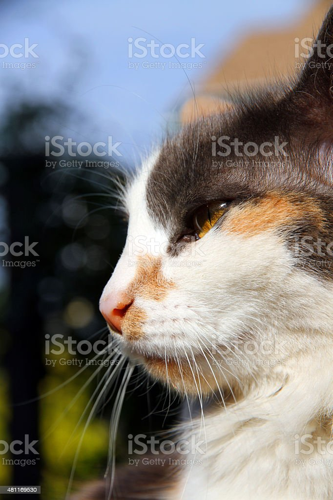Tranquil Mouser stock photo