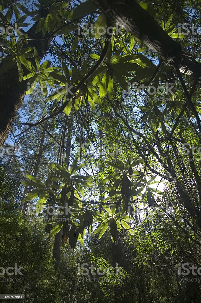 Tranquil Rainforest royalty-free stock photo