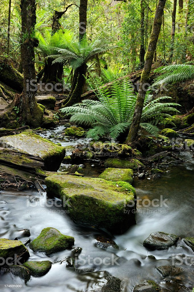 Tranquil rainforest scene with a stream and some ferns stock photo