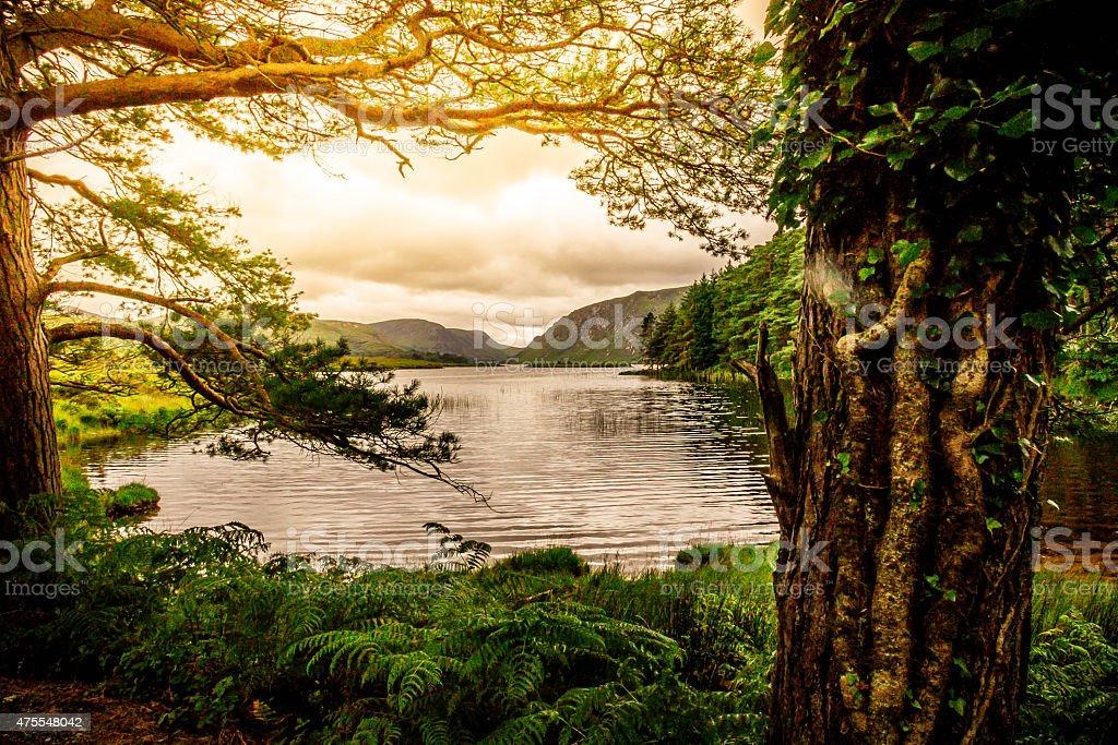 Tranquil Scene from Killarney National Park, Ireland stock photo
