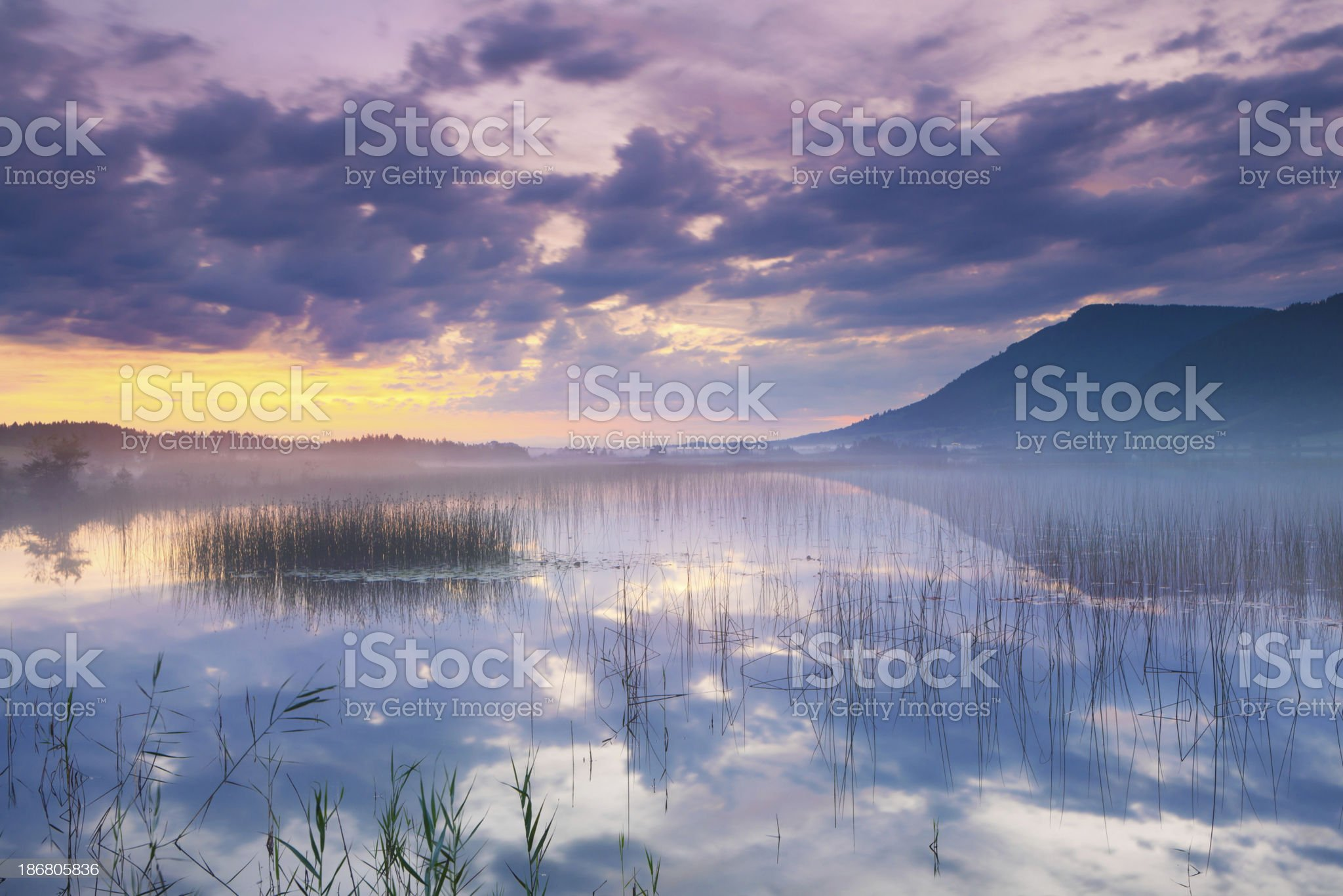 tranquil scene with reed at lake banwaldsee royalty-free stock photo