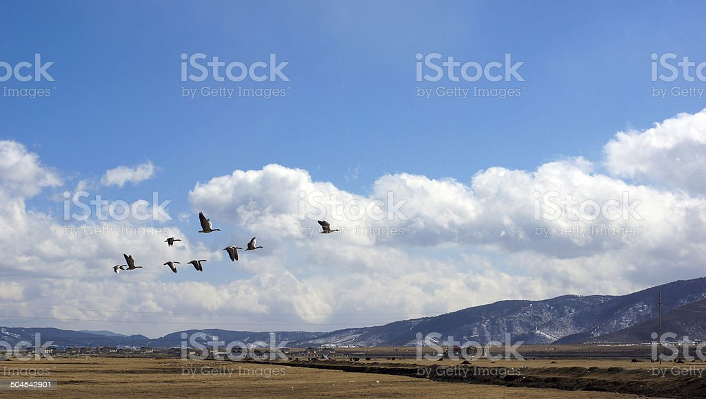 tranquil scenes in meadow landscape stock photo
