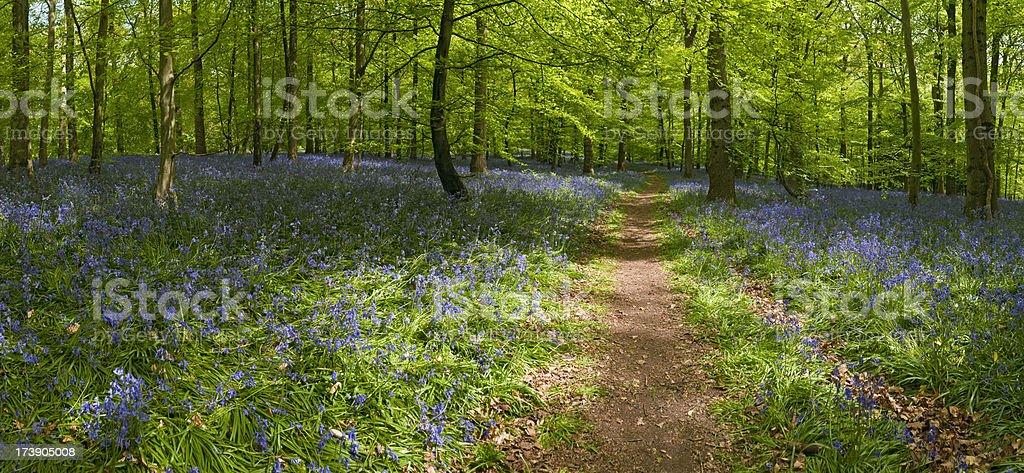 Tranquil summer trail through idyllic woodland royalty-free stock photo