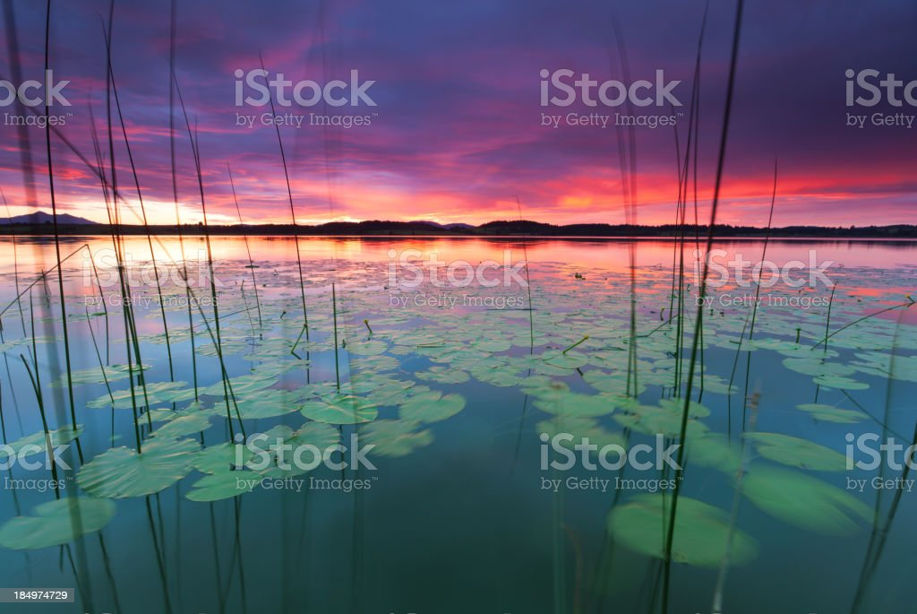 tranquil sunset at lake bannwaldsee, bavaria - germany, water lily stock photo