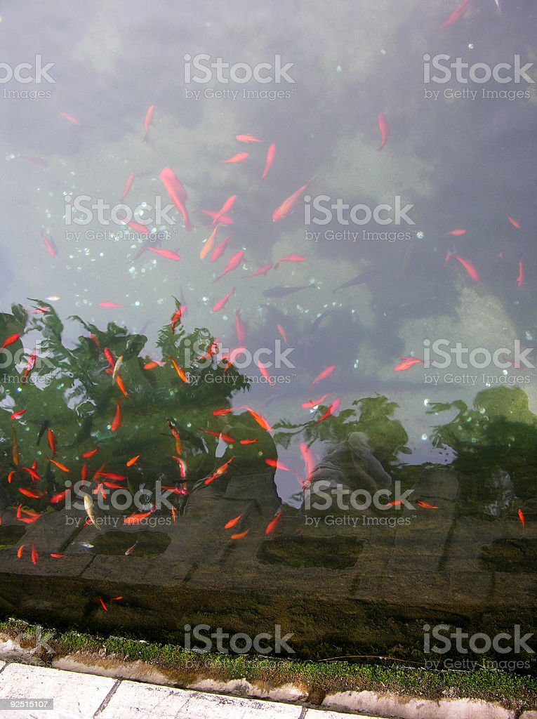 Tranquil surface of a small pound stock photo