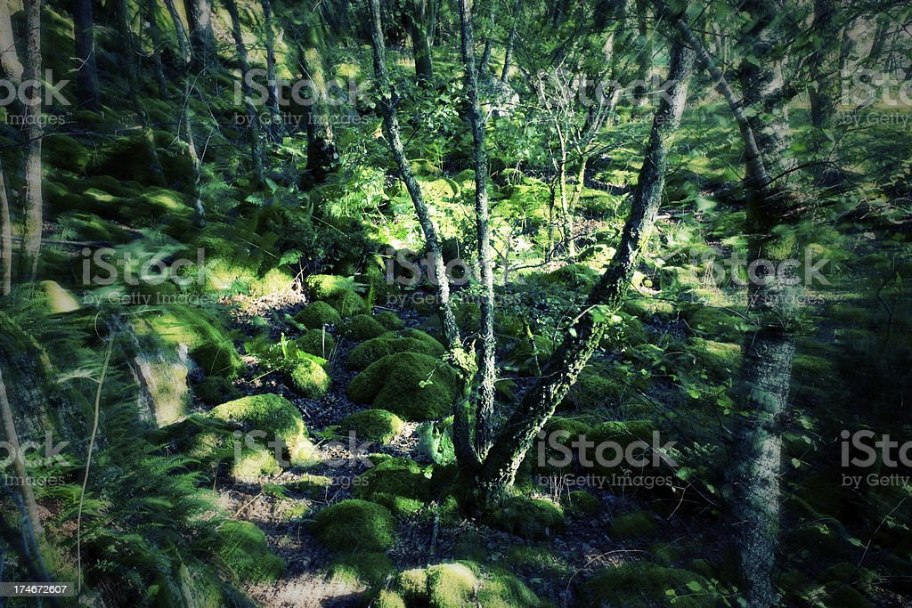 Tranquil woods Background Effect stock photo
