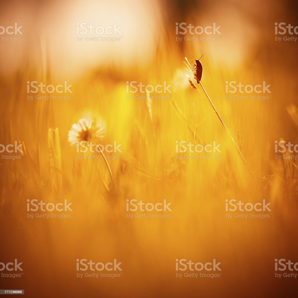 Tranquility in nature royalty-free stock photo