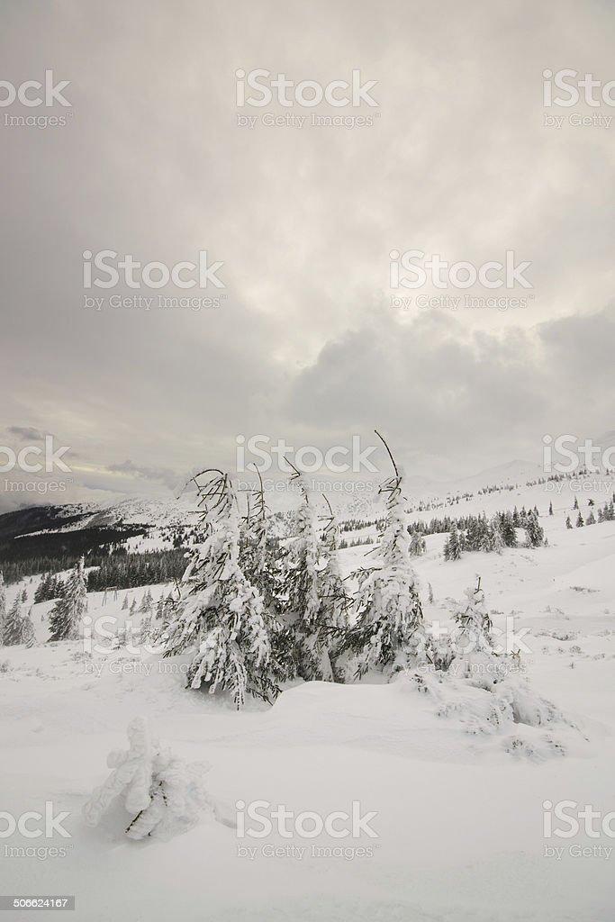 Tranquilidad de invierno.  Carpathian, Ucrania. foto de stock libre de derechos