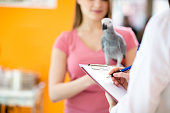 Transcribing therapy to sick parrot in vet infirmary