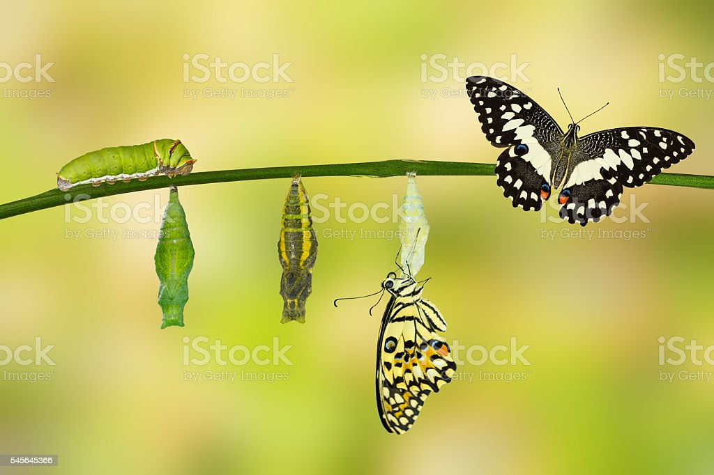 Caterpillar Pictures  Images And Stock Photos