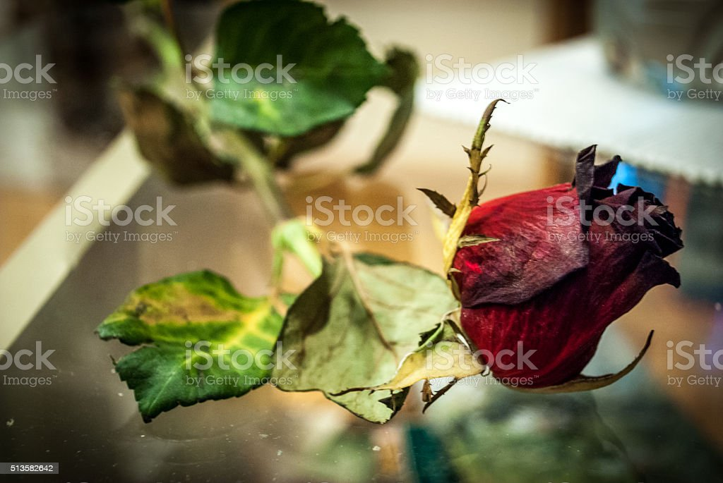 Transience of beauty stock photo