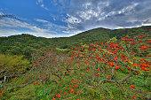Transkei nature reserve