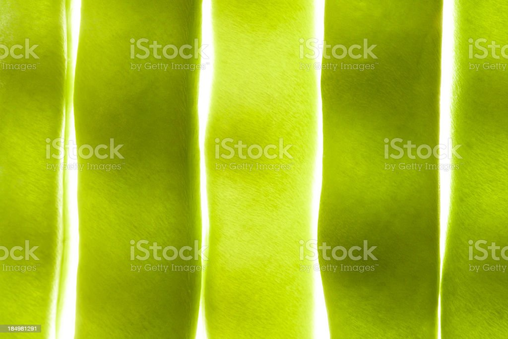 translucent runner bean royalty-free stock photo
