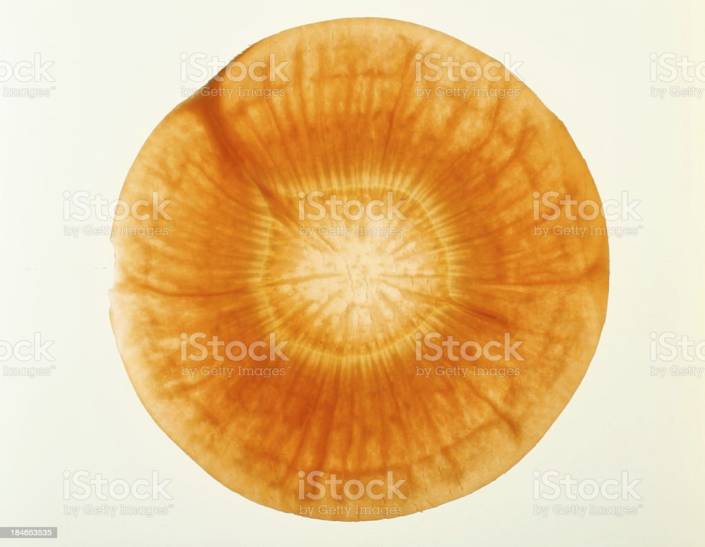 Translucent slice of carrot royalty-free stock photo