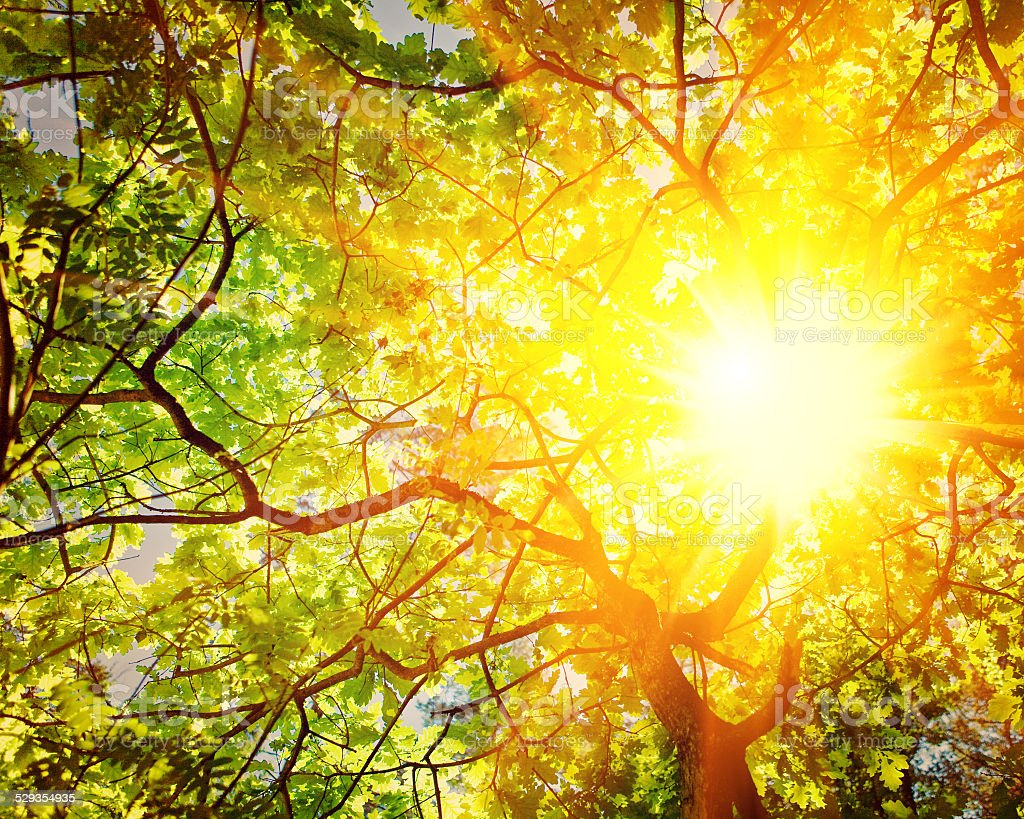 translucent sun through branches of oak tree instagram stile stock photo