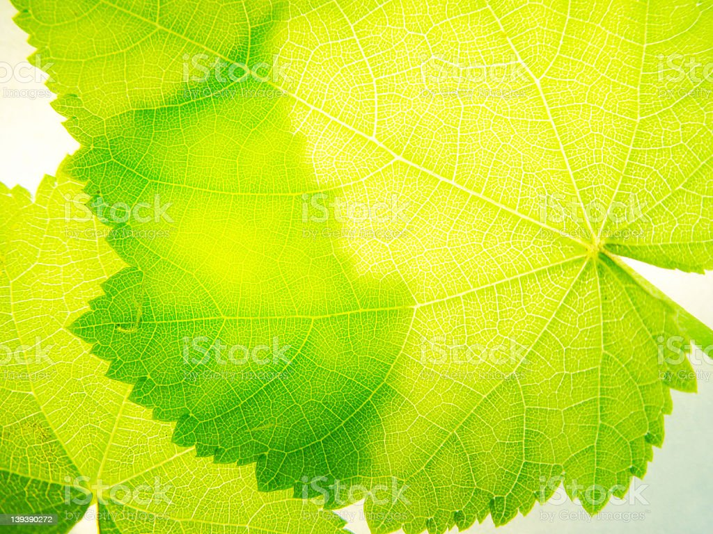 transparency royalty-free stock photo
