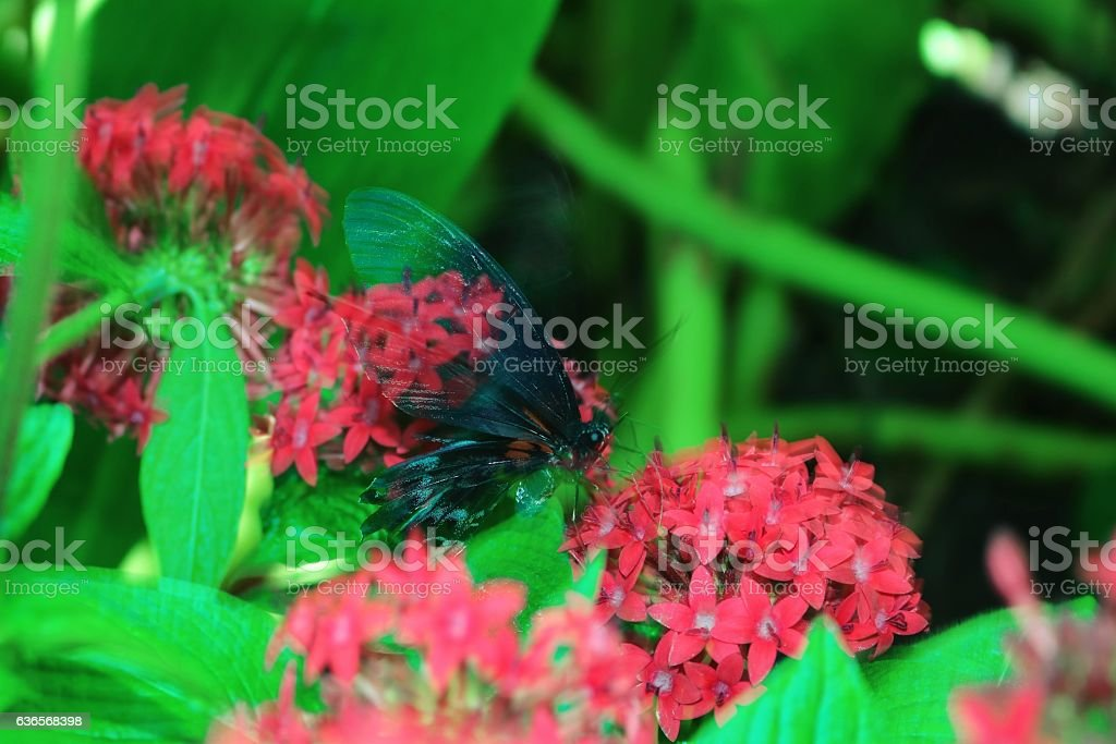 Transparent Butterfly stock photo