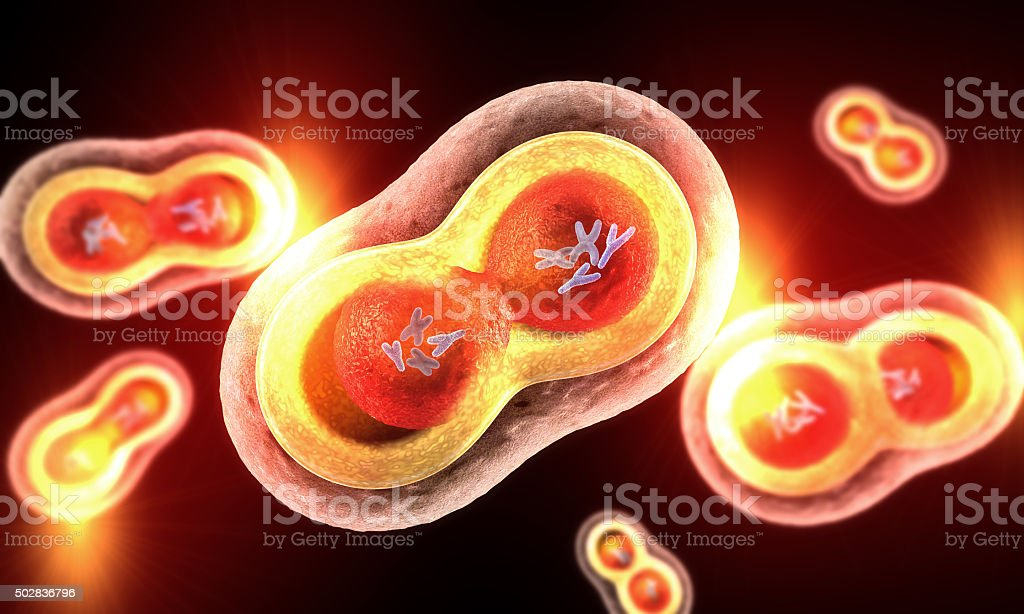 Transparent cells with nucleus, cell membrane and visible chromosomes stock photo