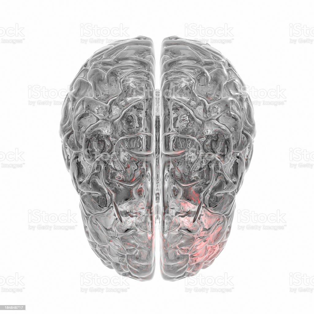 Transparent human Brain isolated on white background stock photo