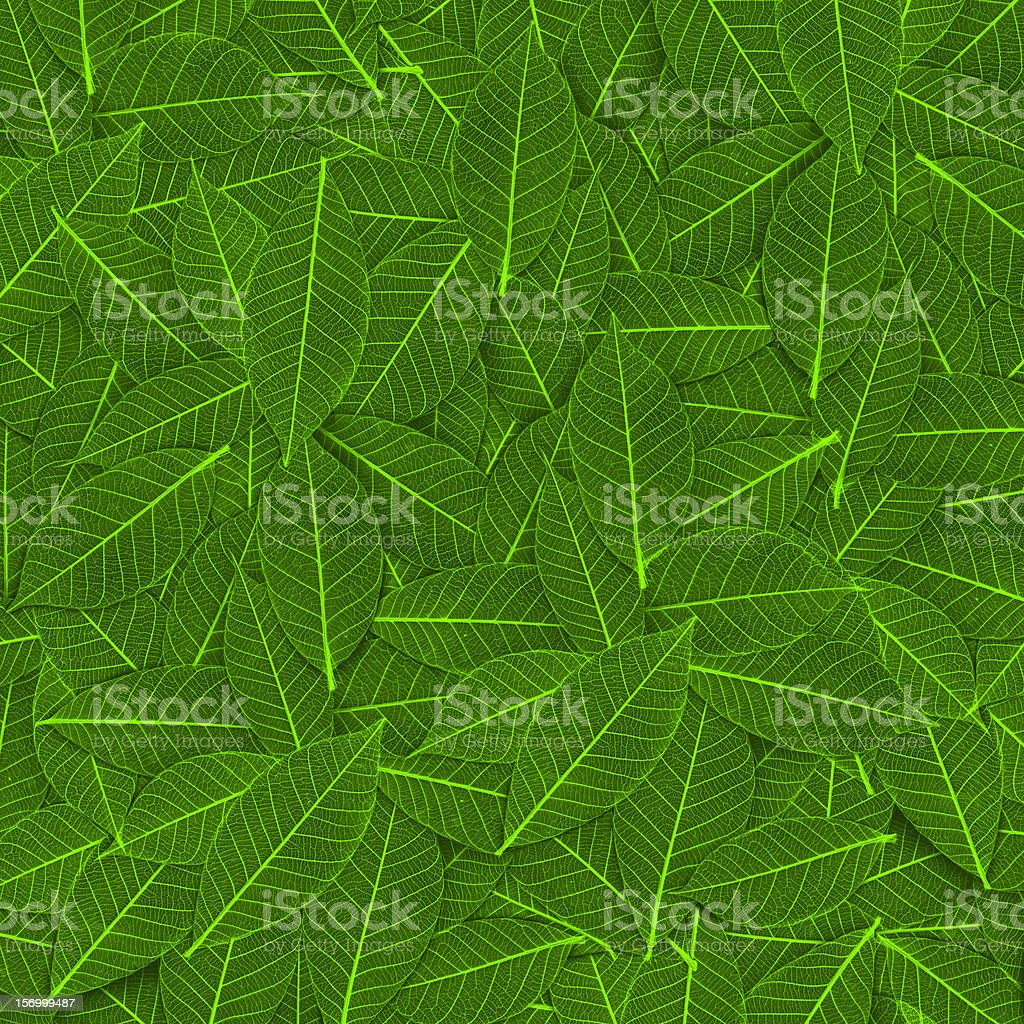 transparent leaf pattern royalty-free stock photo
