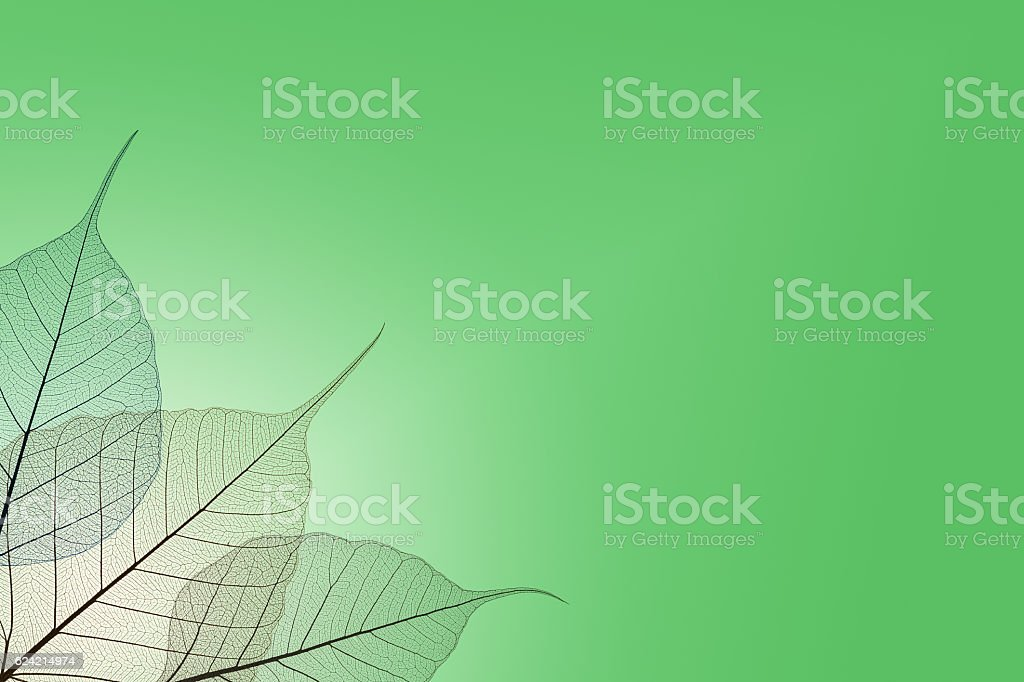 transparent leaves - nature background stock photo