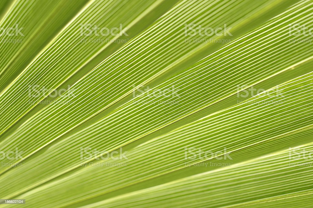 Transparent Palm Leaf royalty-free stock photo