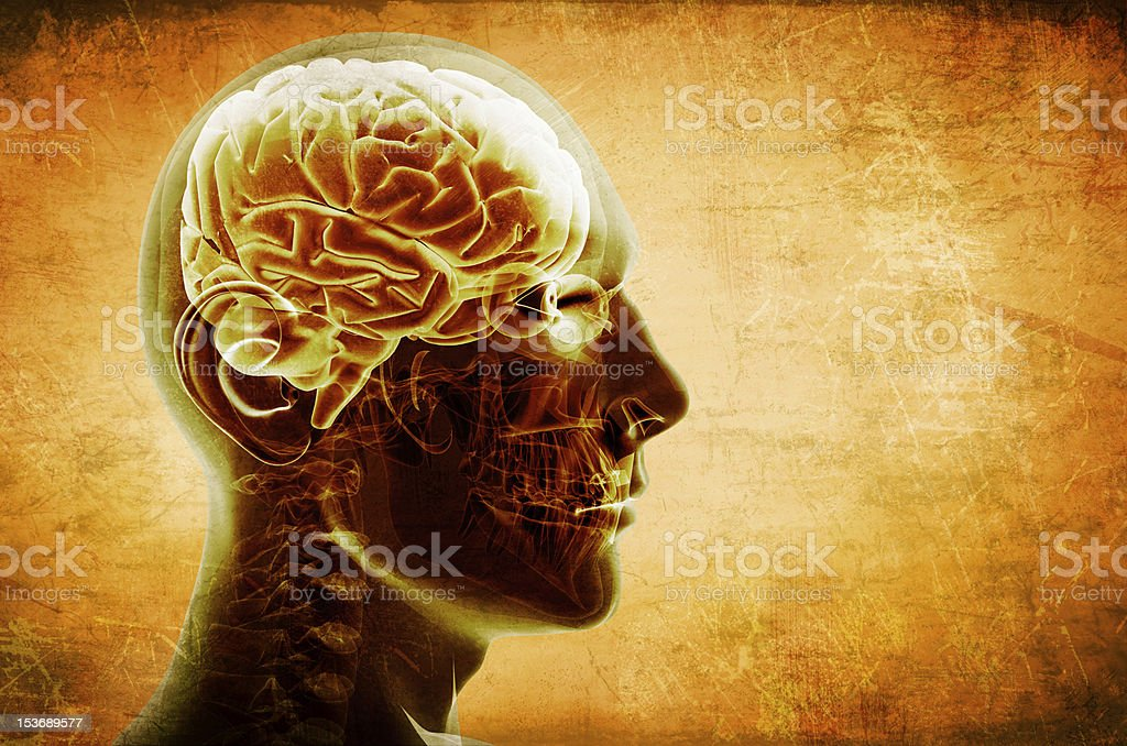 Transparent profile of a head and brain stock photo