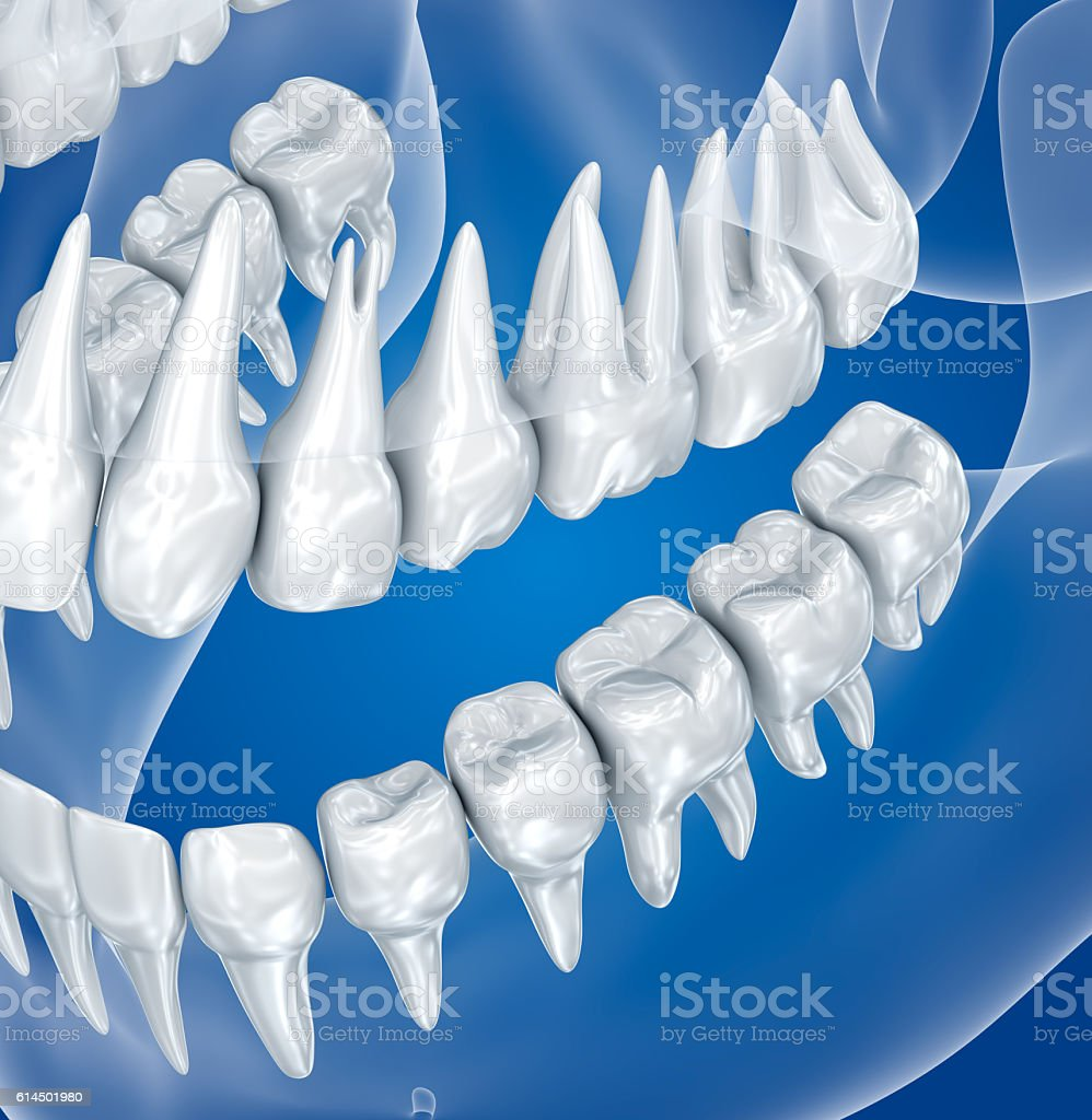 Transparent scull and teeth , xray view . 3D illustration . stock photo