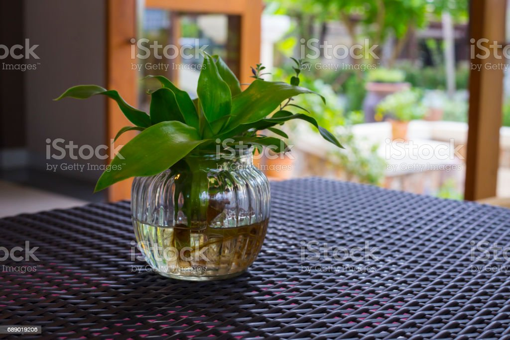 transparent vase with a small sprouts in it stock photo