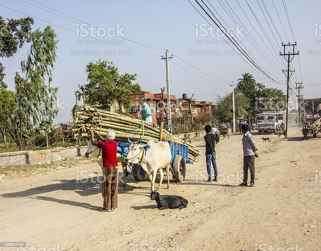 transport of bamboo stock photo